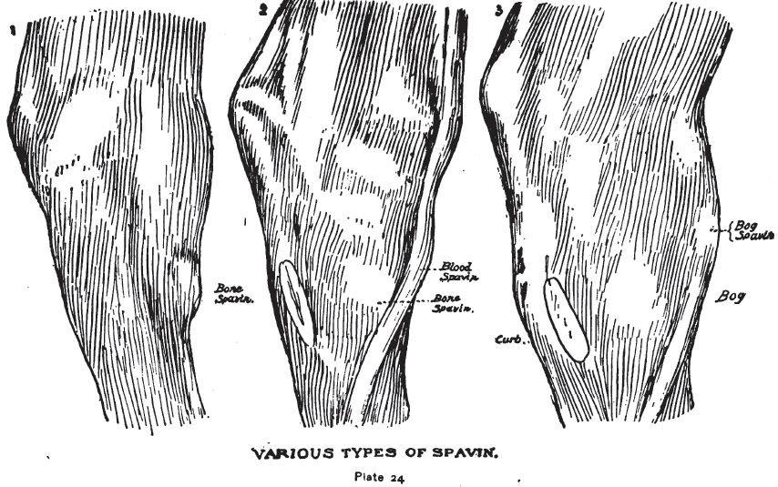 Various Types of Spavin