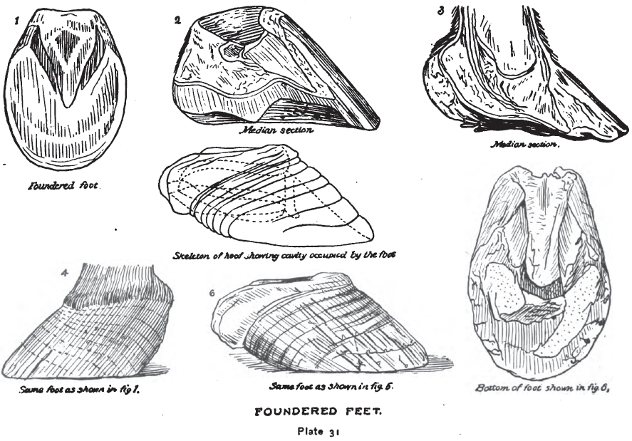 Foundered Feet
