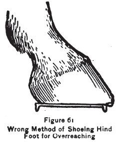 Wrong method for shoeing hind foot for overreaching
