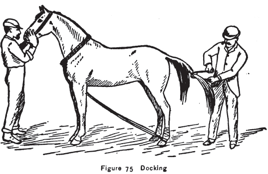 Docking a Horse's Tail